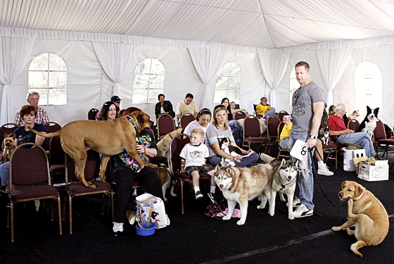 http://images.nymag.com/daily/entertainment/24_greatestamericandog_lg.jpg