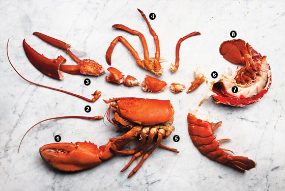 Related Keywords & Suggestions for Lobster Legs