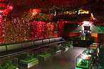Whale Watching: Which Nightclubs Boast the Highest Tabs?