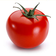 A healthy tomato ... for now.