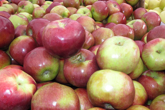 Macoun Apples at the Greenmarket.