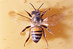 Everything Guide to Bees; Platt Swings by Kenmare