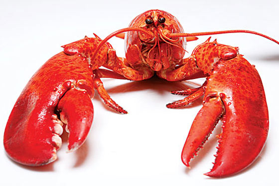 Lobster Goes Lowbrow; New York&#8217;s Own Theme Restaurants