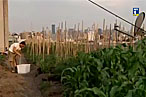 Lettuce Rejoice: Billy's Gets a Farm Stand, Brooklyn Grange Opens