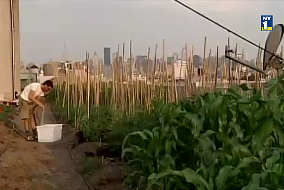 Dinner on a Rooftop Farm