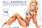 Montreal City Officials Accuse PETA of Sexism
