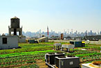 Rooftop Gardens Now Growing Things for Supermarket Shelves
