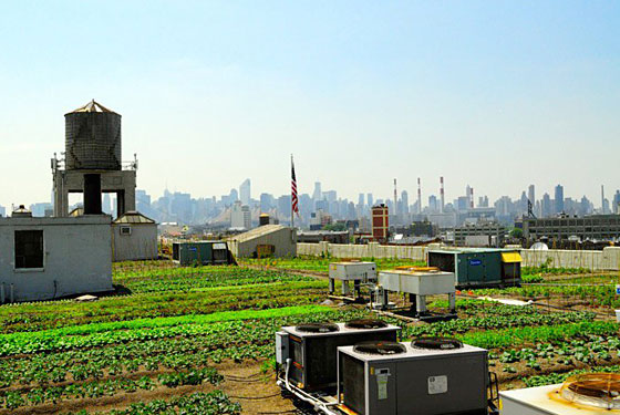 Rooftop Greens and 'Craft&#8217 Ice Cream Come to Brooklyn Flea
