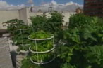 A Preview of New York&#8217;s First &#8216;Rooftop-to-Table&#8217; Restaurant