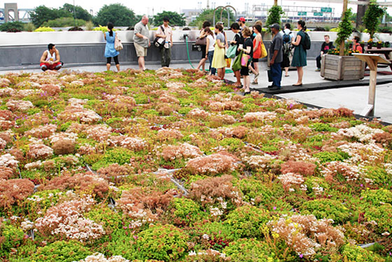 Tour the City's New Rooftop Vegetable Garden