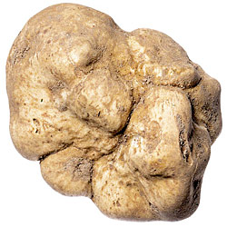 Gorge on White Truffles at Sapori d&#8217;Ischia&#8217;s Recession-Friendly Truffle Dinner