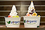 Yorganic Opens in Tribeca Amid Fro-Yo Meltdown