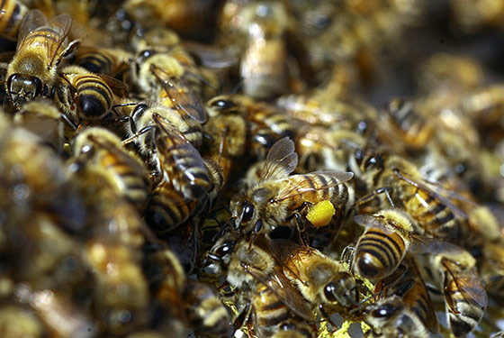 http://images.nymag.com/images/2/home/10/10/07_bees_560x375.jpg