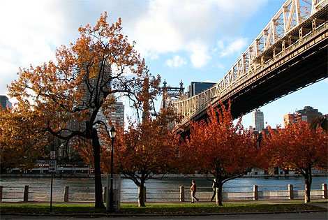 Roosevelt Island New York City Neighborhood Nyc