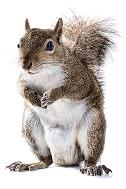 A History Of Squirrels In New York New York Magazine
