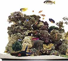 Fish Tank from Aquatic Creations in New York.