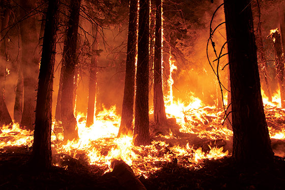 Mann Gulch And The Greatest Fire Story Ever Told New York Magazine