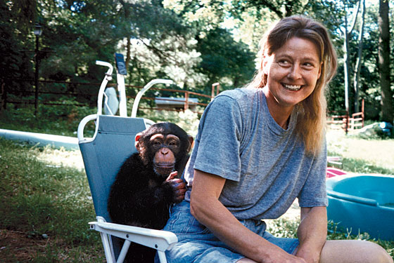 Understanding Travis the Chimp and His Mother, Sandy Herold